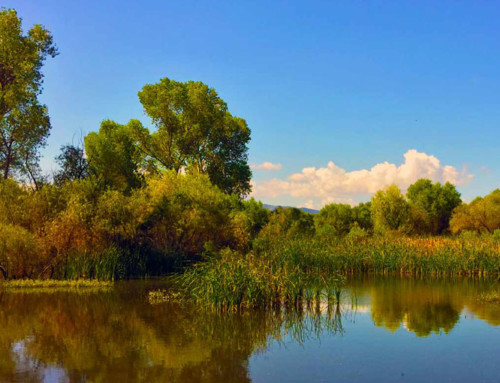 Las Lagunas De Anza And Six Learning Opportunities In The Great Outdoors