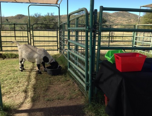 Santa Fe Ranch: A Special Place for Special Needs